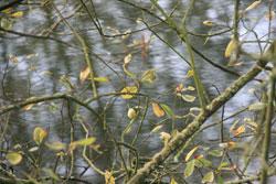 Ealees-Lodge-closeups_Oct2011-006