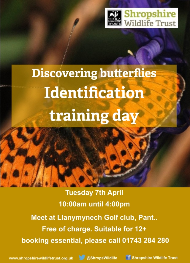 Discovering Butterflies - ID poster